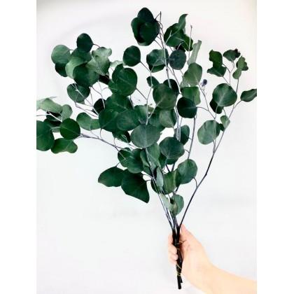 SHIOK Preserved Eucalyptus Big Leaves for Home Room Decoration AF0067